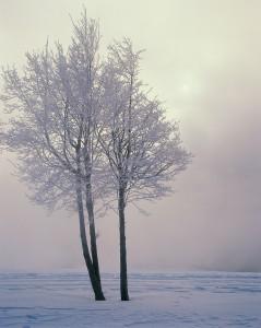 Cold Weather Scene